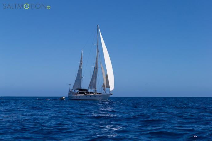 Regina surf charter - Fiji