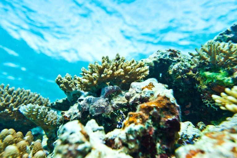 Beautiful reefs
